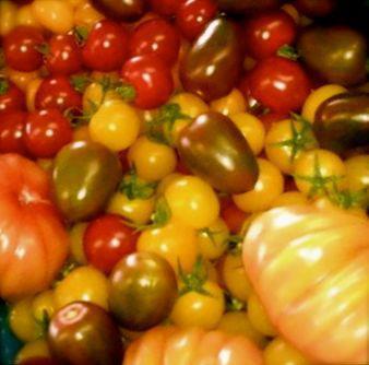 verschillende tomaten